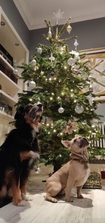 Barking Mad Cotswolds Dog Sitting Home Boarding Christmas Tree
