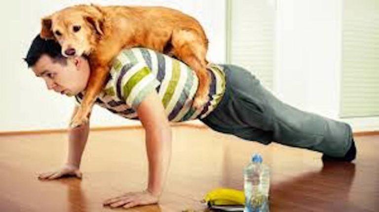 Barking Mad Cotswolds Dog Sitting Push Up