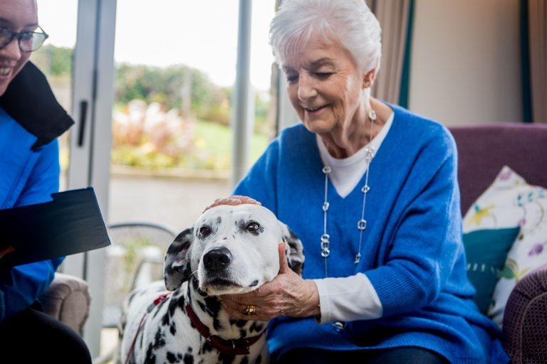 Barking Mad Dog Sitting Host With Dalmatian (28) dog boarding