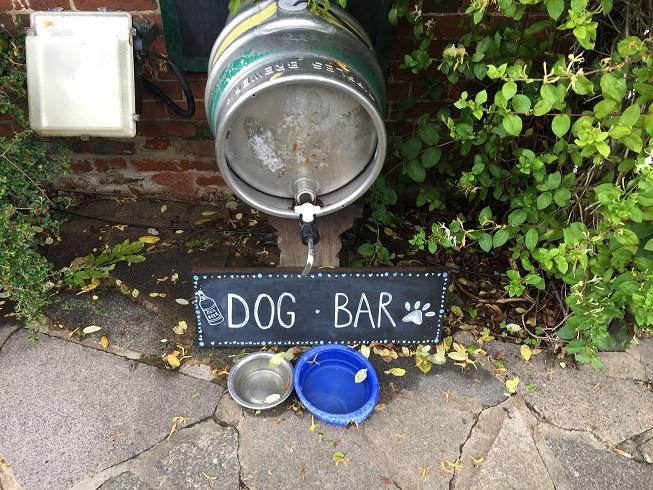 Helen Tyler Barking MAd Dog sitting home boarding South Norfolk