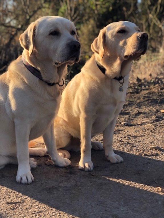 Leo And Boone