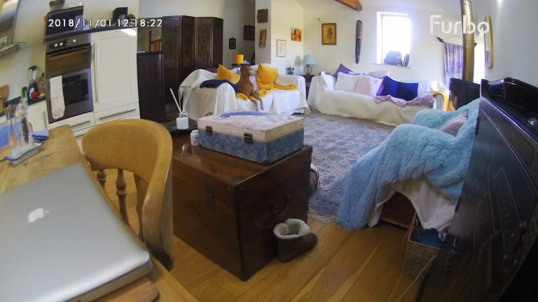 Ollie the dog on Furbo camera tested by Barking Mad dog sitters