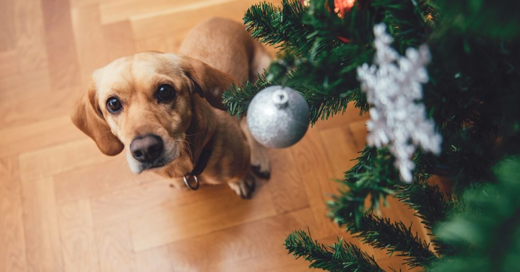 Dog Sitting By The Christmas Tree Picture Barking Mad