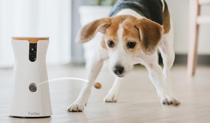 Furbo Dog Sitting Barking Mad Treat Dispenser Camera