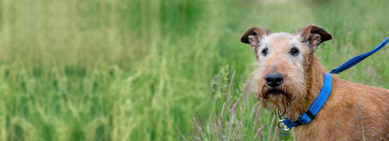 Murphy Grass Petplan Dog Insurance Pet Care Barking Mad Home Boarding