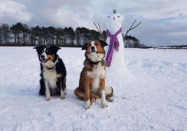 Winter Dogs 2
