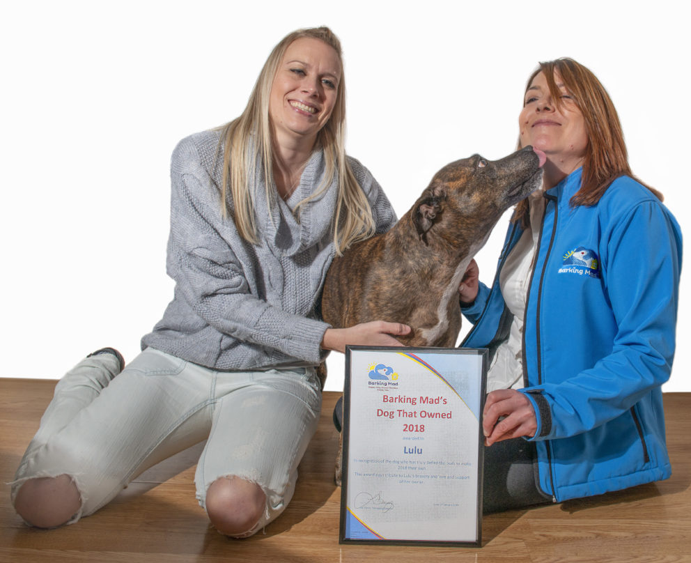 Brave Staffordshire bull terrier Lulu receives national award from Barking Mad Dog Care