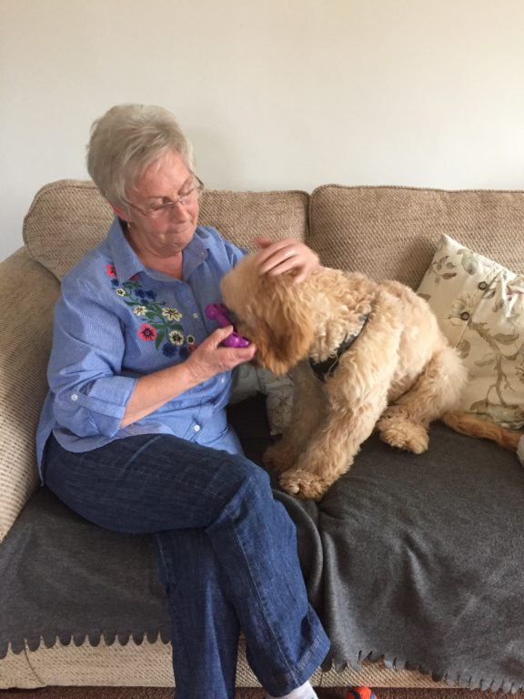Barking Mad Dog Sitter Wendy Fearn With Frankie The Cockapoo