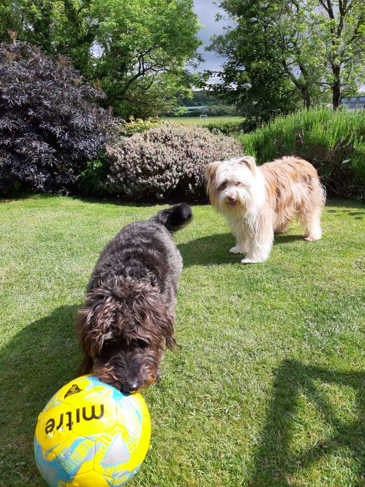 Halley And Henry on a dog holiday with Barking Mad Lancaster