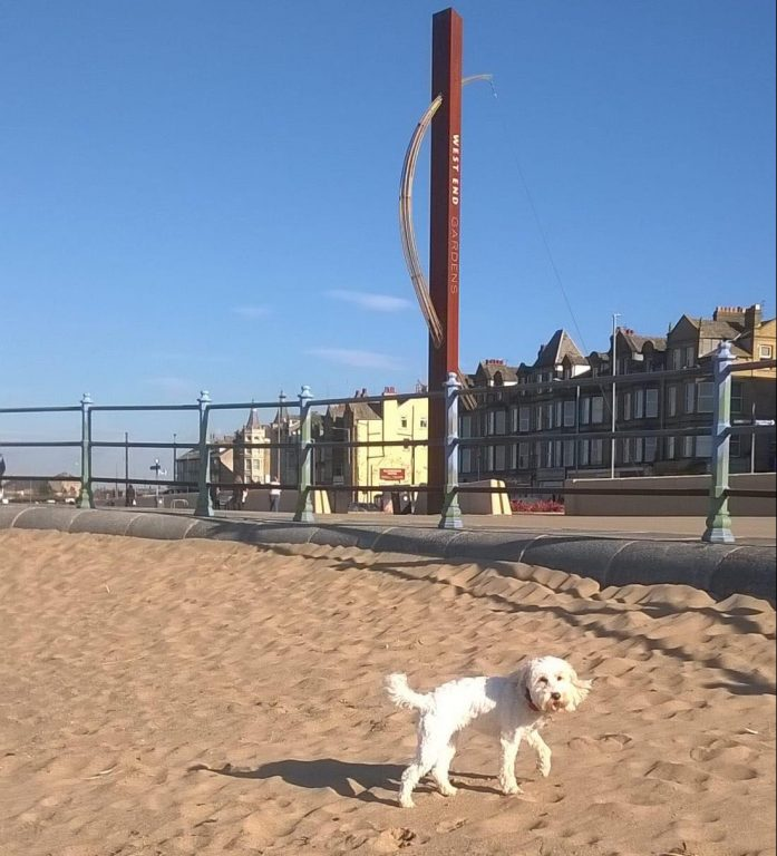 We provide 5 star rated dog holidays in the Morecambe and Lancaster area
