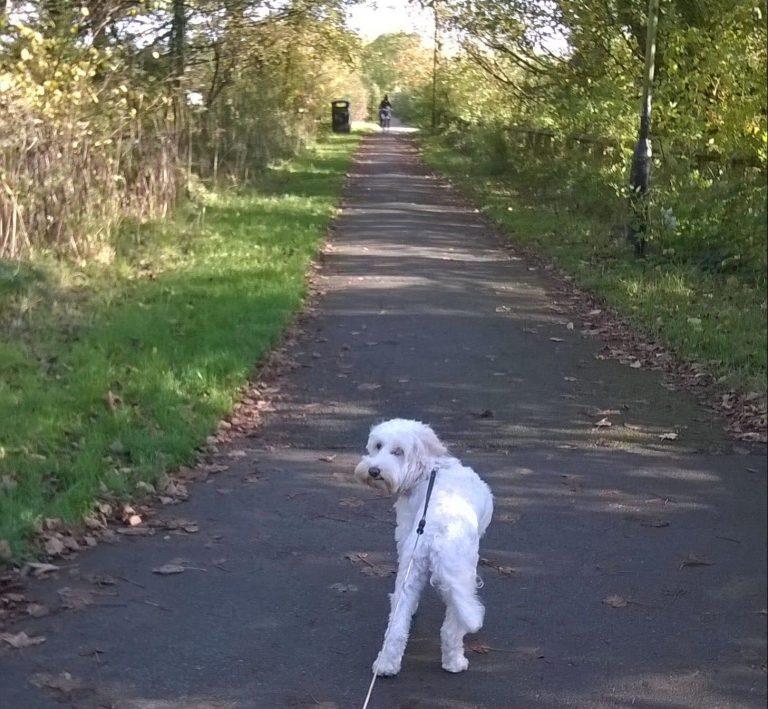 Skye the dog enjoyed autumn walks at Crook O Lune