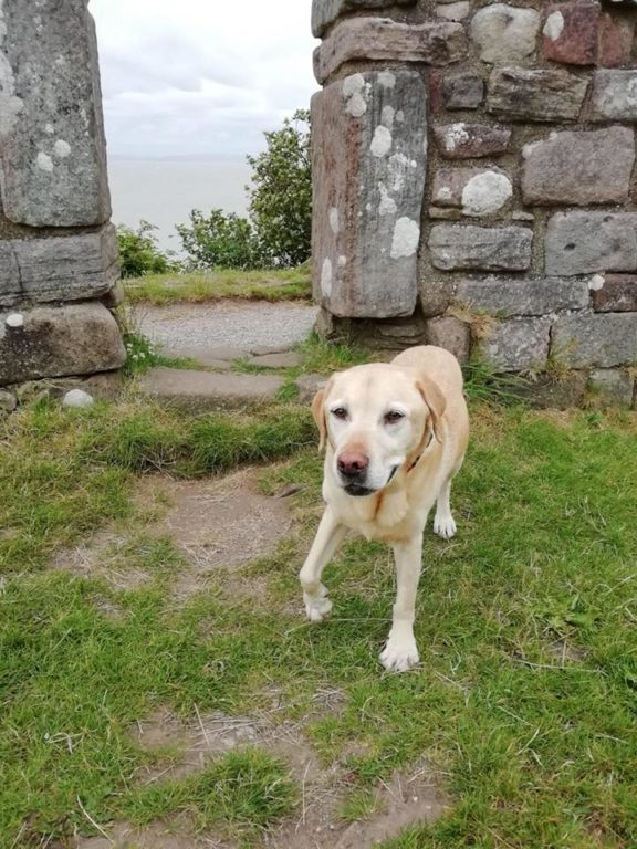 Alfie The Dog On Holiday With Barking Mad Lancaster