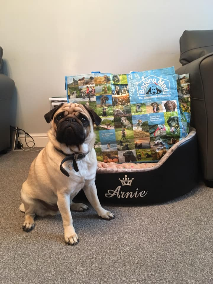Arnie The Pug Packing For His Dog Holiday