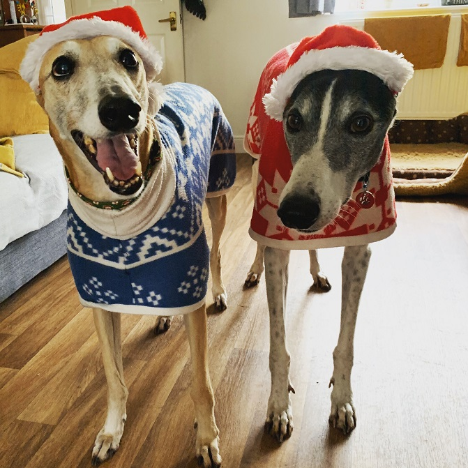 Photo 1 Pedro And Gabby In Their Christmas Jumpers
