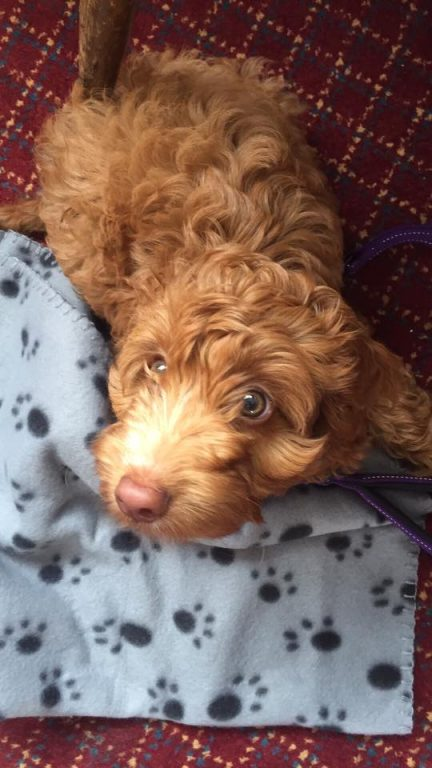 Barking Mad dog sitters share their top tips for potty training puppies