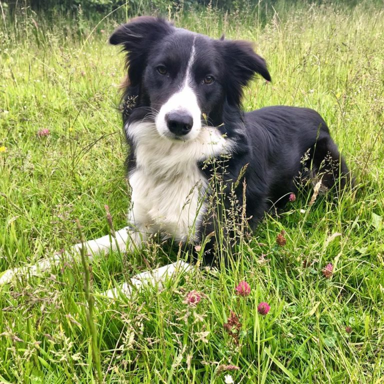 Barking Mad Dog Care discuss dog hay fever and how to help if your dog suffers
