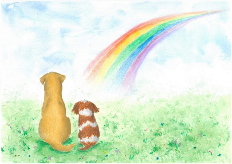 Rainbow Bridge Illustration By Hannah Robinson Illustrations E1532001434305