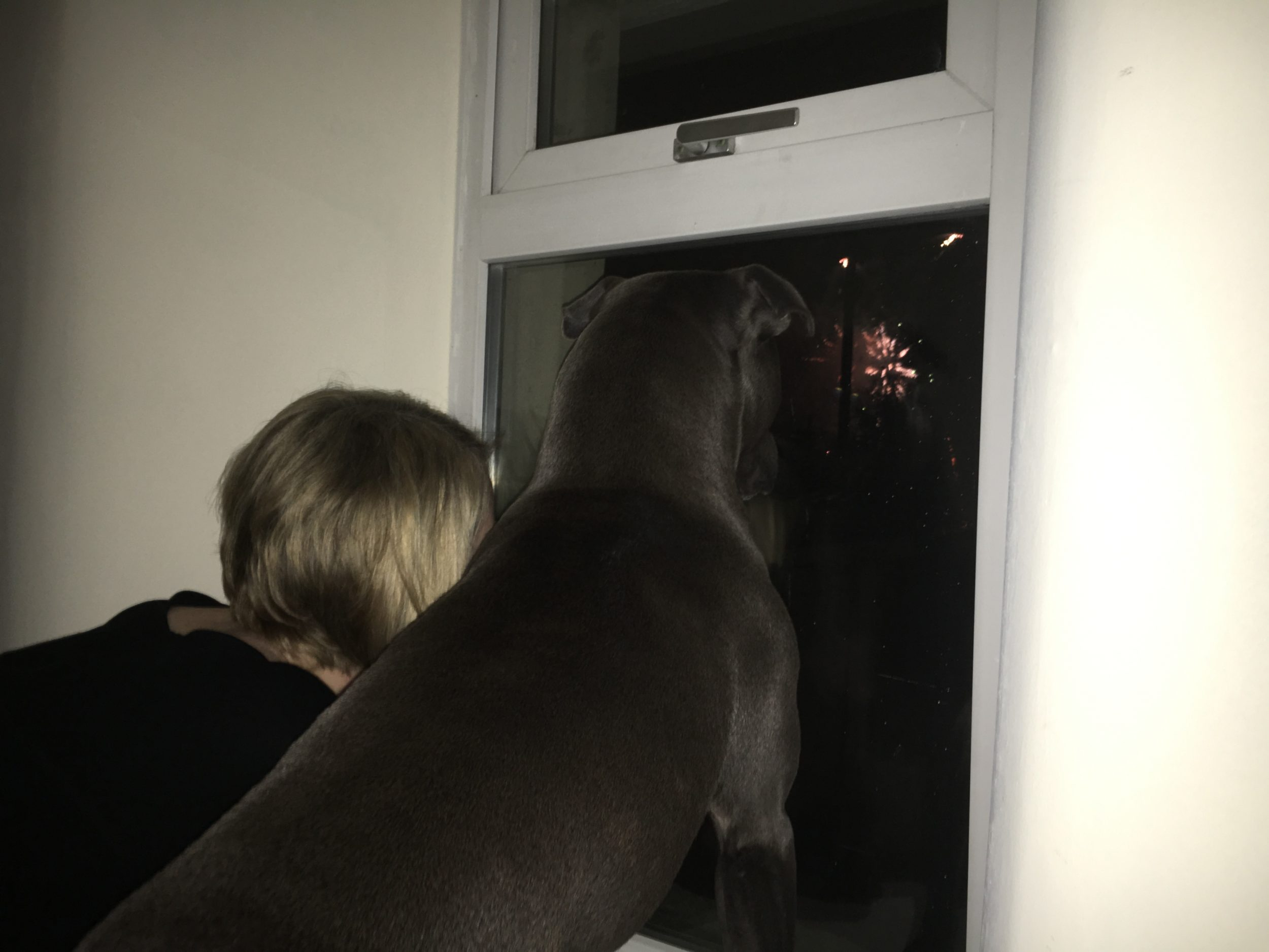 If your dog is scared of fireworks, there are many tips and tricks you can use to make them feel calmer