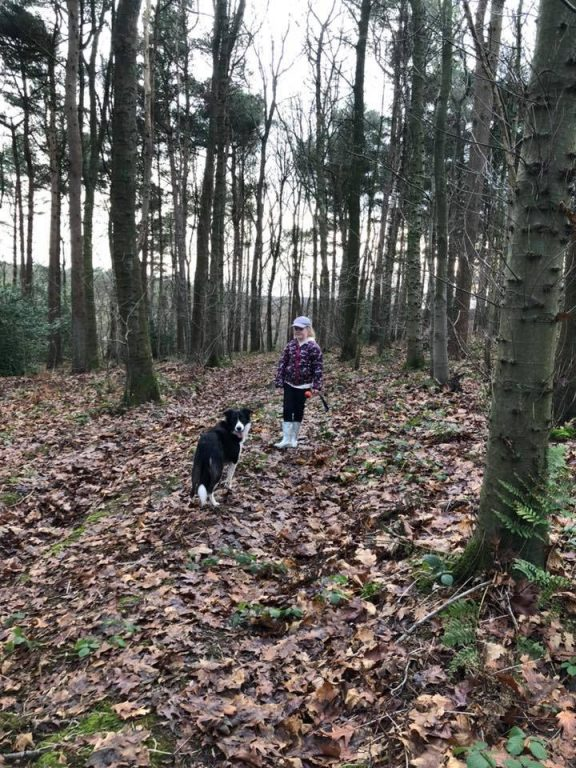 Woodland Dog Walk Near Carnforth