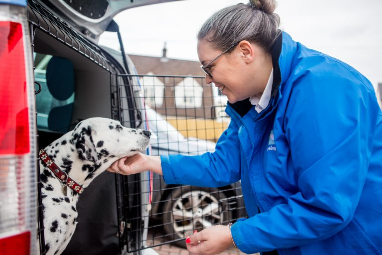 Working with dogs as a franchise owner with Barking Mad is a way to have a flexible and successful career
