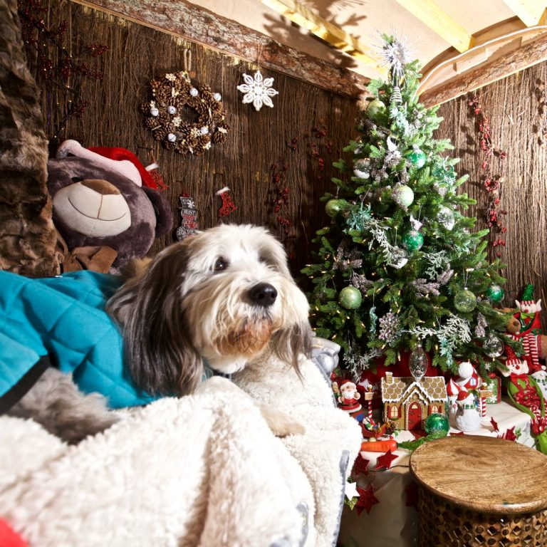 Check out our top tips for how to travel with your dog at Christmas