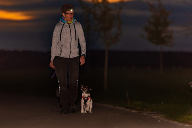 Woman Goes With A Dog Walking In The Autumn At Night With Heard Torch Jack Russell Terrier